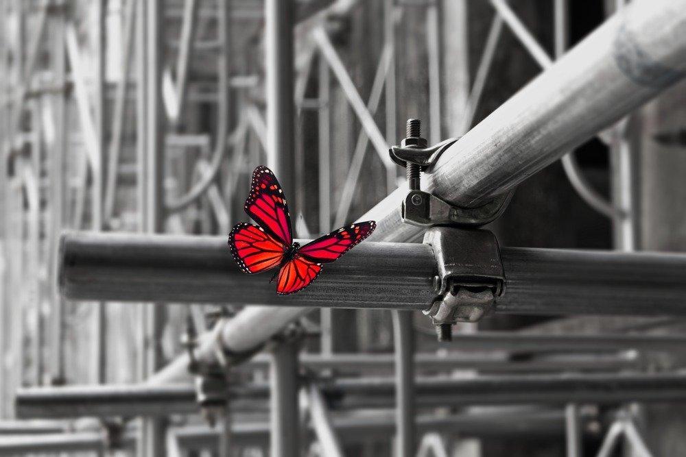 redsky butterfly